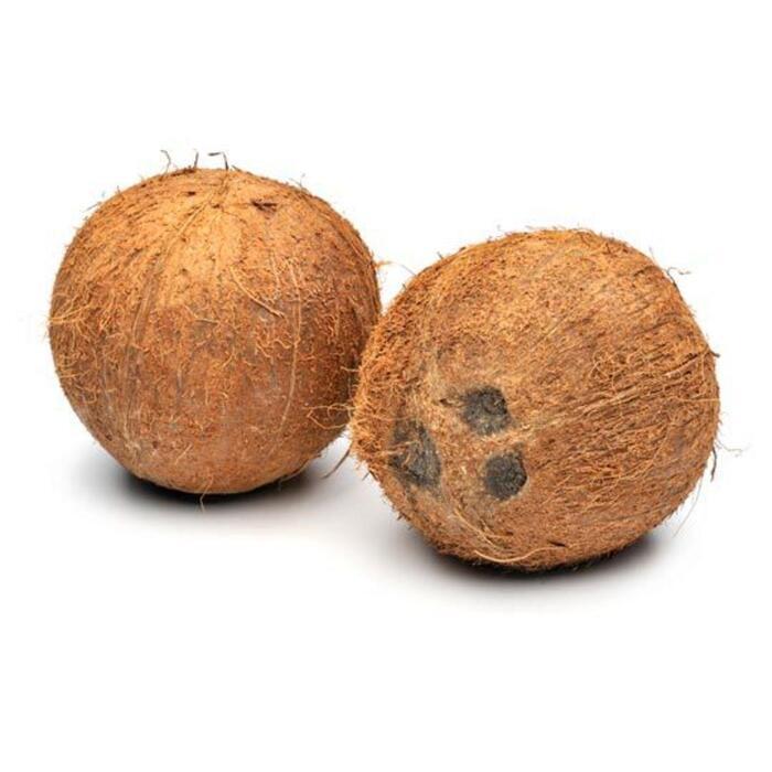 EAT ME Kokosnoot