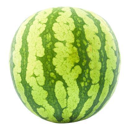 watermeloen (pitloos)